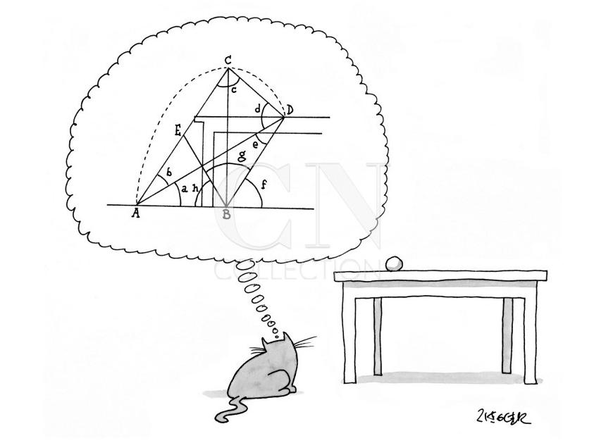 Kot myśli o skomplikowanych równaniach
