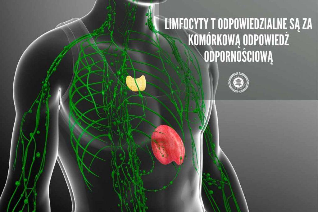 Limfocyty T stwardnienie rozsiane