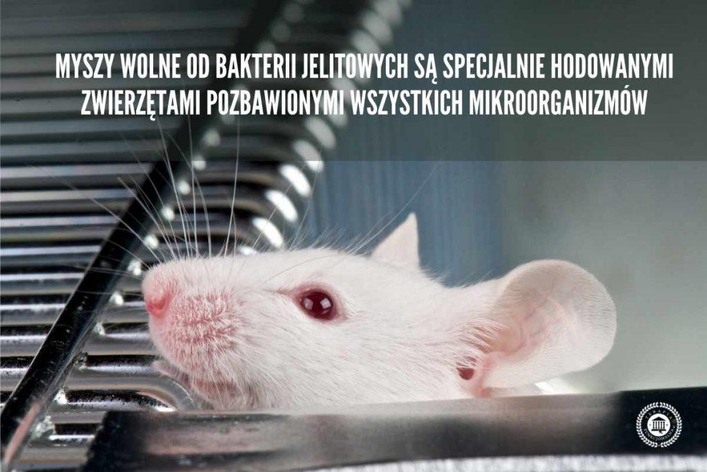 mysz labolatoryjna badania stwardnienie rozsiane